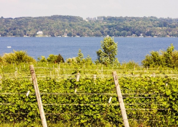 04-emerging-american-wine-regions